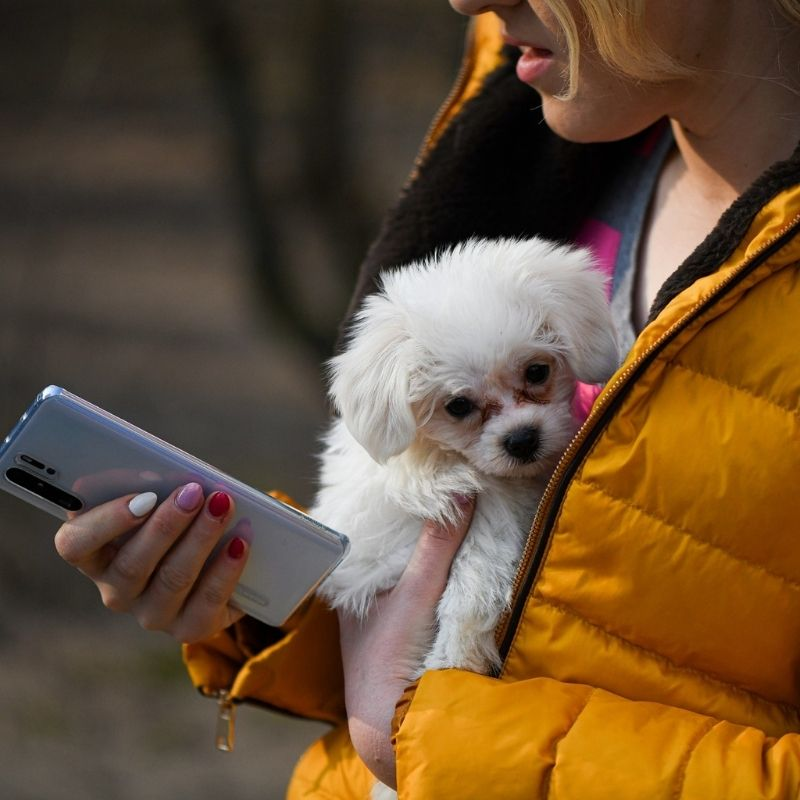 5 mejores apps para dog-lovers